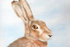 Hare652